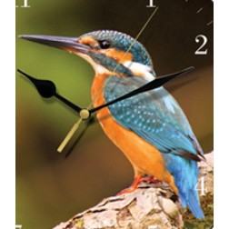 Kingfisher Bird Wall Clock