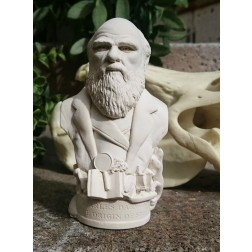 Charles Darwin Bust