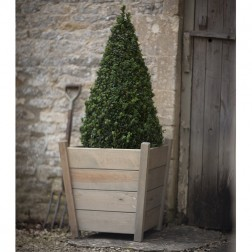 Spruce Wood Small Tapered Planter