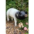 Black & White Pig Up Garden Ornament