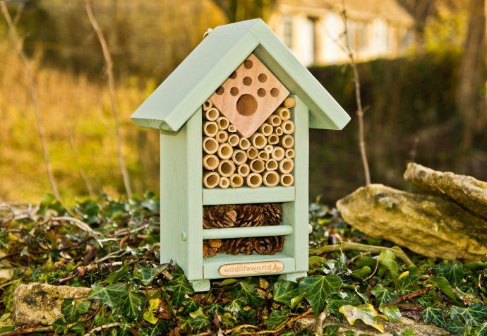 Bee and Bug Biome-3644