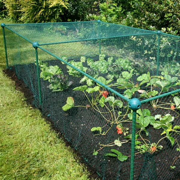 Garden Fruit And Vegetable Cage With Anti Bird Netting - 0.625m High_6