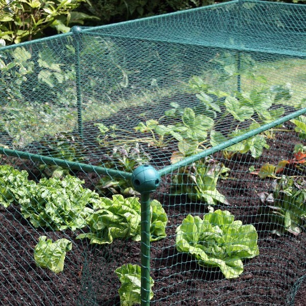 Garden Fruit And Vegetable Cage With Anti Bird Netting - 0.625m High_5