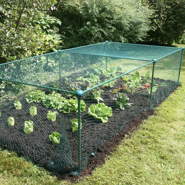 Garden Fruit And Vegetable Cage With Anti Bird Netting - 0.625m High_4