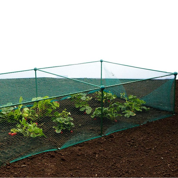 Garden Fruit And Vegetable Cage With Anti Bird Netting - 0.625m High_3