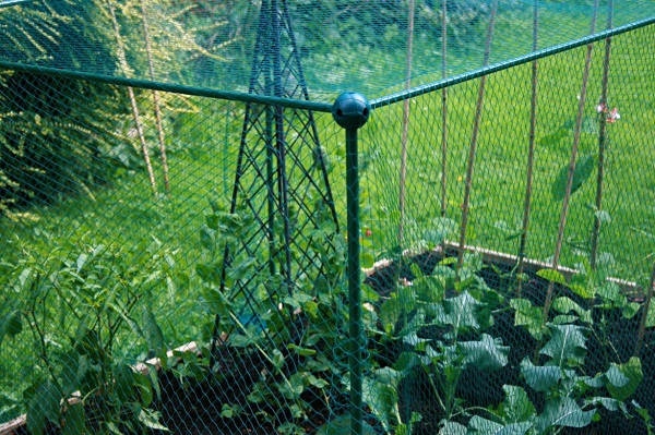 Garden Fruit And Vegetable Cage With Anti Bird Netting - 0.625m High_1