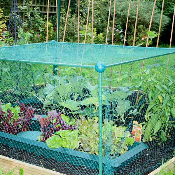Garden Fruit And Vegetable Cage With Anti Bird Netting - 0.625m High_2
