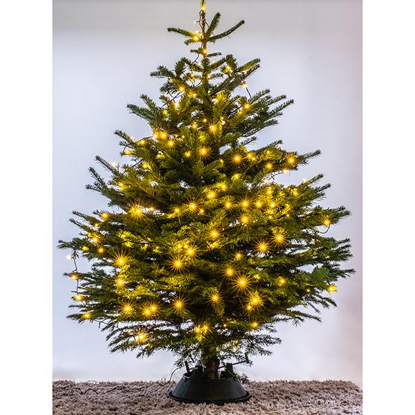 Nordmann Fir Real Christmas Tree_1