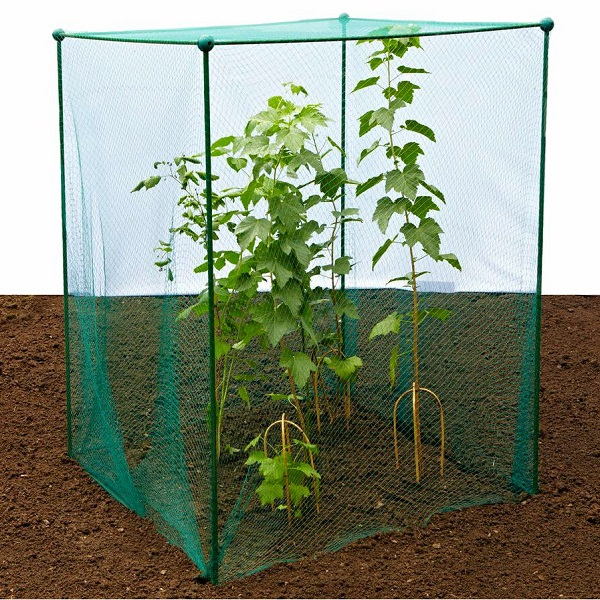 Garden Fruit And Vegetable Cage With Anti Bird Netting 1.875m high